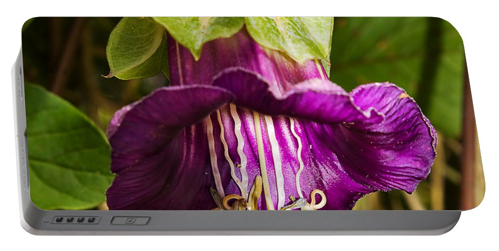 Flower Portable Battery Charger featuring the photograph Purple Flower Of The Vine Known As Cathedral Bells by Louise Heusinkveld