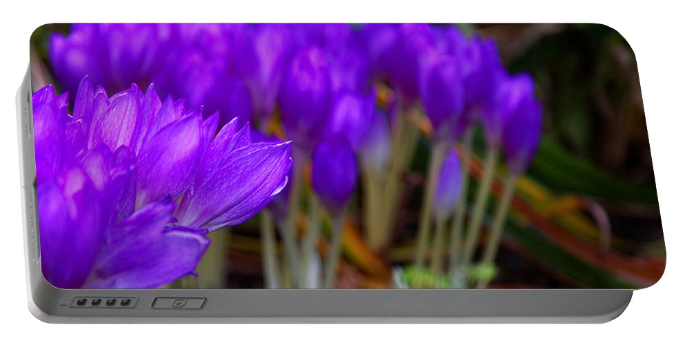 Purple Flowers Portable Battery Charger featuring the photograph Purple Flowers by Scott Hill