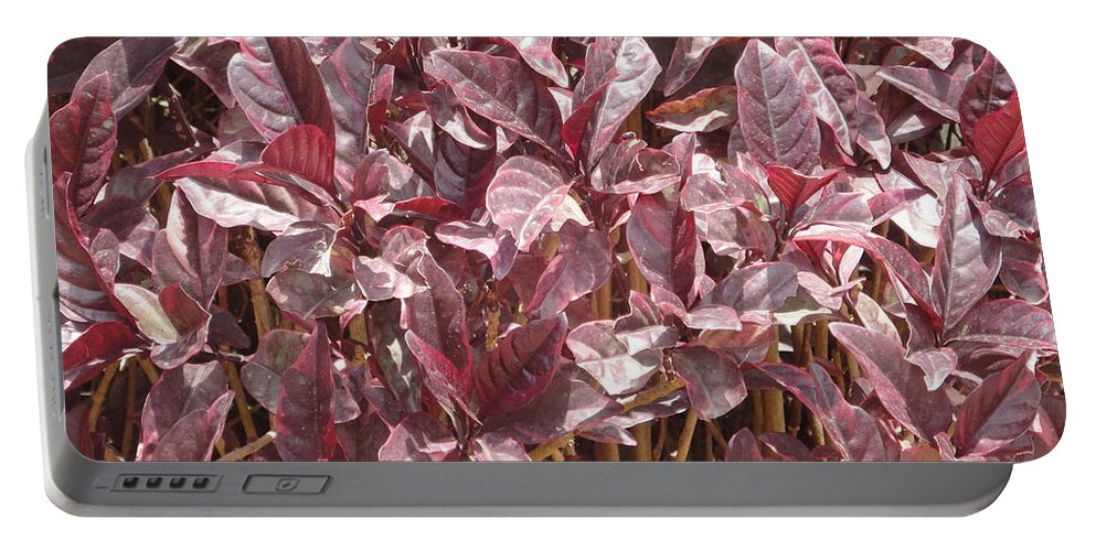 Purple Portable Battery Charger featuring the photograph Purple Foliage by Usha Shantharam