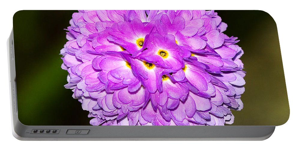 Flower Portable Battery Charger featuring the photograph Purple Himalayan Primrose by Louise Heusinkveld