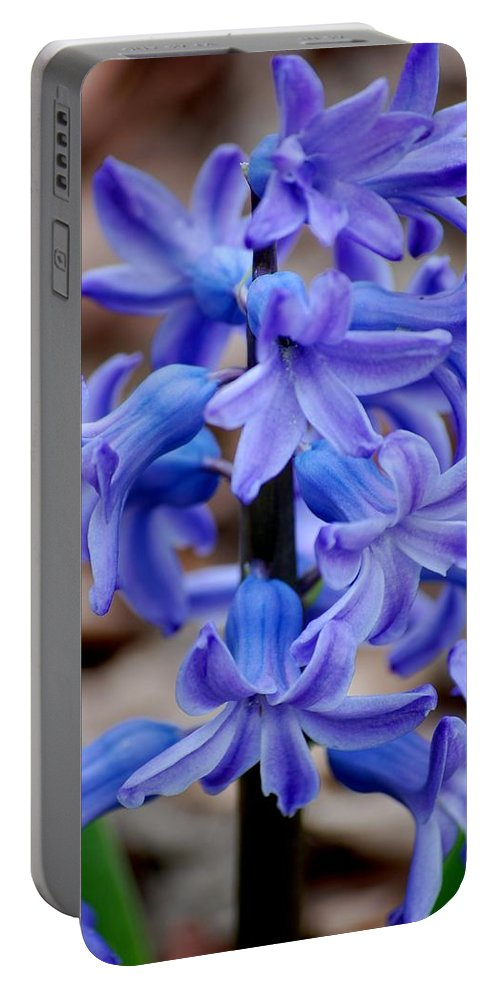 Digital Photography Portable Battery Charger featuring the photograph Purple Hyacinth by David Lane
