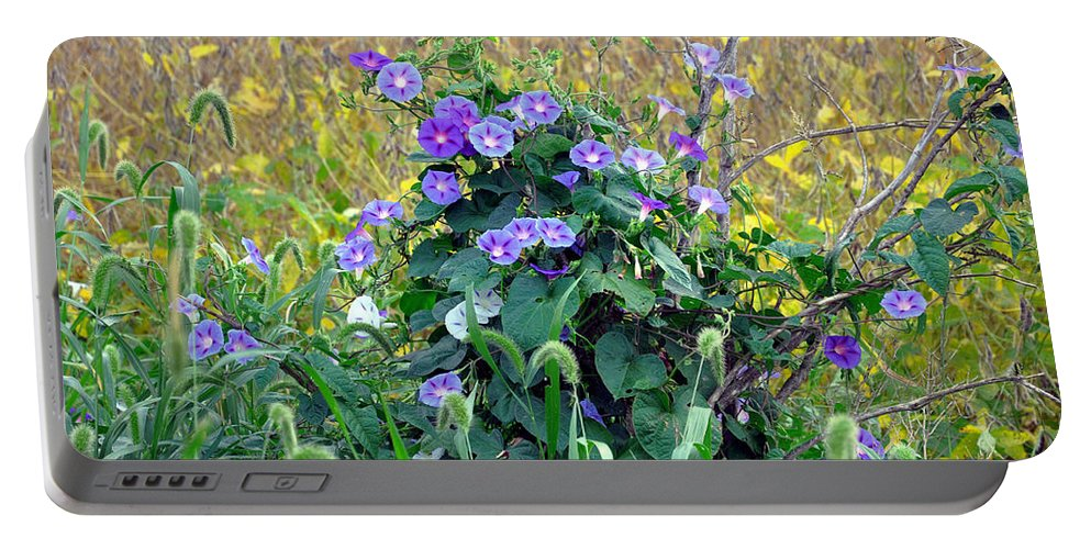 Morning Glory Portable Battery Charger featuring the photograph Purple In The Morning by Brittany Horton