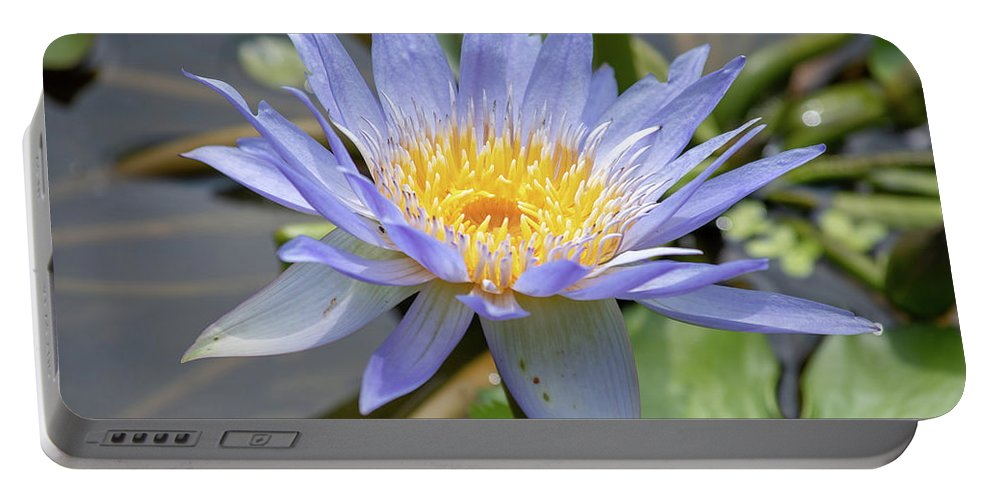 Beauty Portable Battery Charger featuring the photograph Purple Water Lily Flowers Blooming In Pond by Merrillie Redden