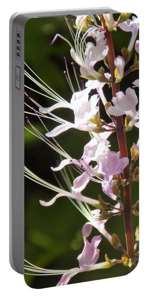 Purple Portable Battery Charger featuring the photograph Purple Lycoris by Sarah Barba
