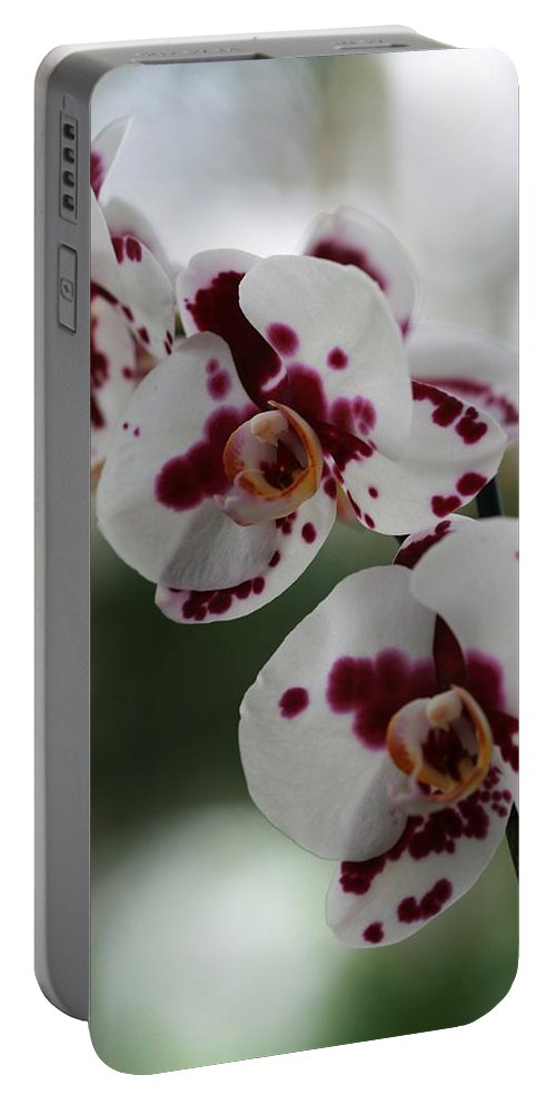 Orchid Portable Battery Charger featuring the photograph Purple Splash Orchid 2 by Kristina Jones