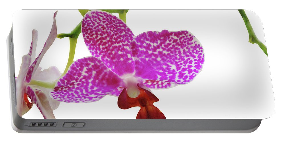 Phalaenopsis Portable Battery Charger featuring the photograph Purple Spotted Orchid On White by Heather Kirk