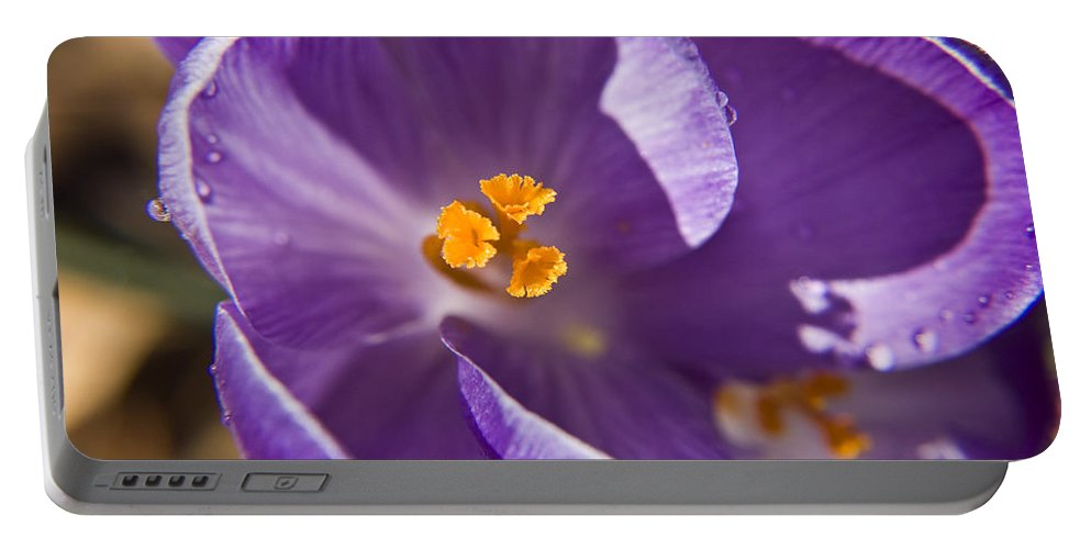 Crocus Portable Battery Charger featuring the photograph Purple Spring Crocus by Teresa Mucha