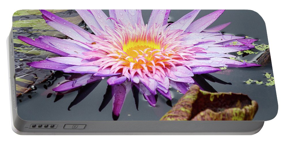 Flower Portable Battery Charger featuring the photograph Purple Star Water Lily by Terri Morris