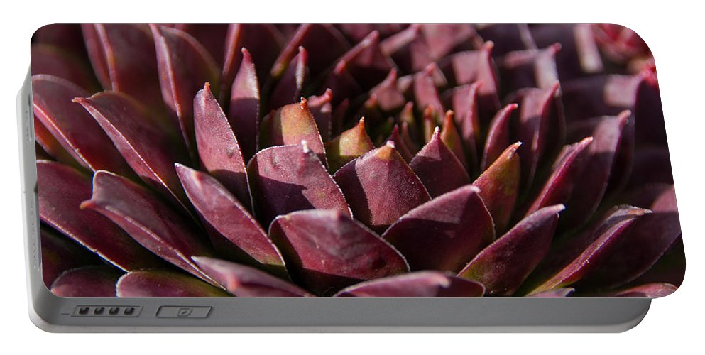 Succulent Portable Battery Charger featuring the photograph Purple Succulent by Susan Wright