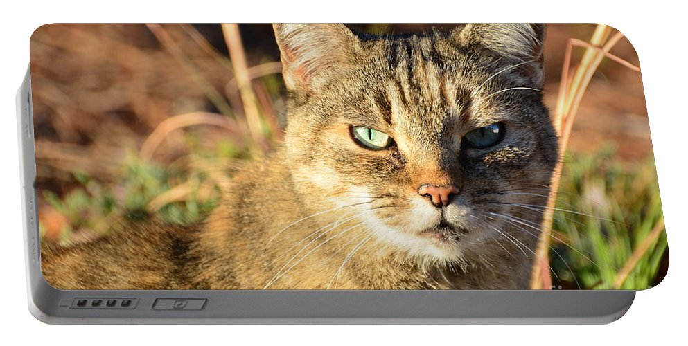 Adrian-deleon Portable Battery Charger featuring the photograph Purr-fect Kitty Cat Friend by Adrian DeLeon