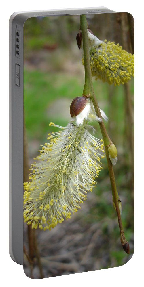 Flora Portable Battery Charger featuring the photograph Pussy Willow by Susan Baker