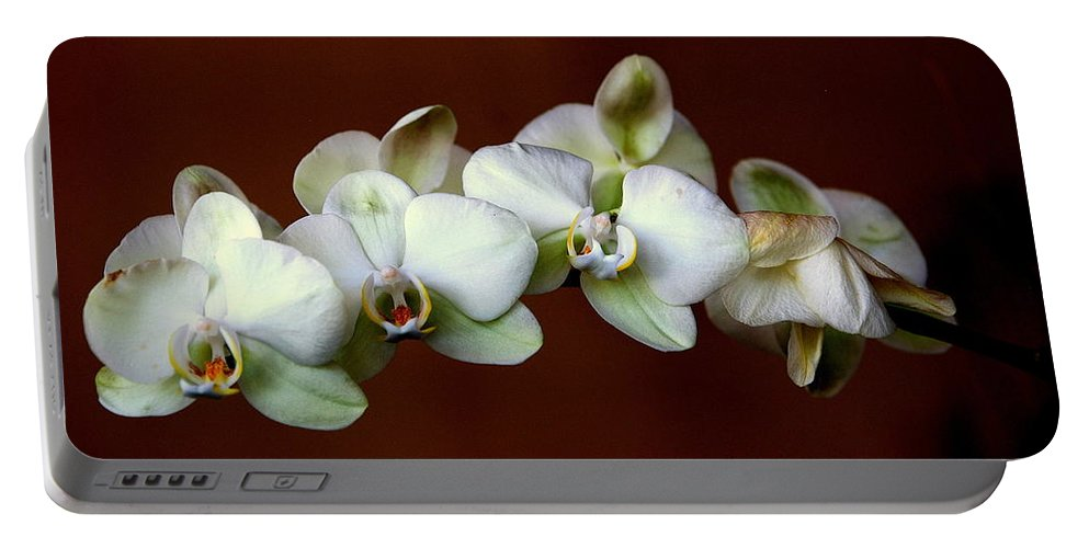 Orchids Portable Battery Charger featuring the photograph Quadruples by Susanne Van Hulst