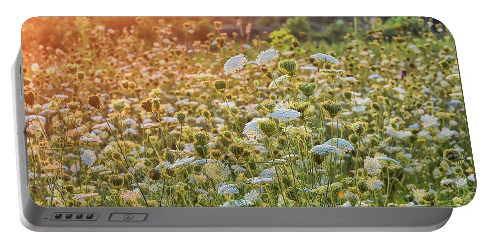 Queen Anne's Lace Portable Battery Charger featuring the photograph Queen Anne At Sunset by Lois Bryan