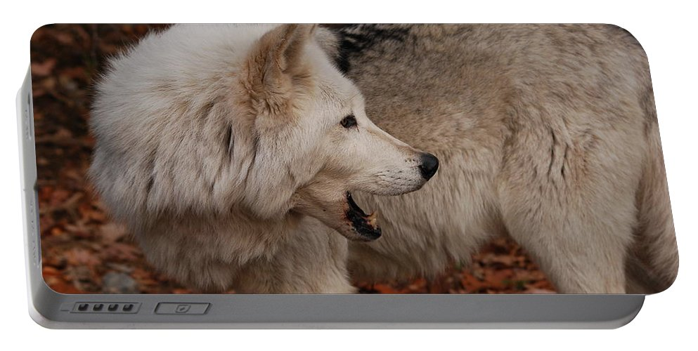 Wolf Portable Battery Charger featuring the photograph Quiet Back There by Lori Tambakis