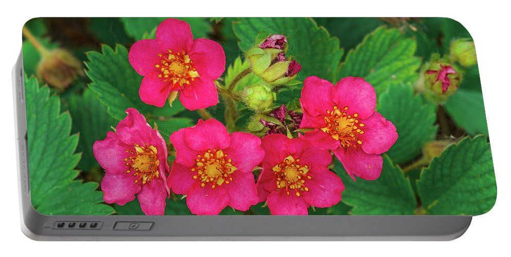 Flowers Portable Battery Charger featuring the photograph Quite A Juxtaposition, Isn't It ?  by Bijan Pirnia