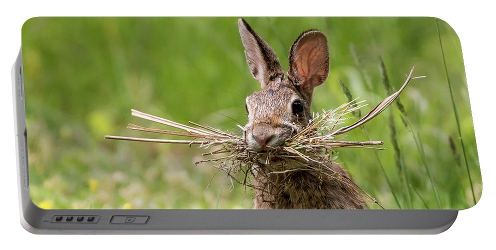 Rabbit Collector Square Portable Battery Charger featuring the photograph Rabbit Collector Square by Terry DeLuco
