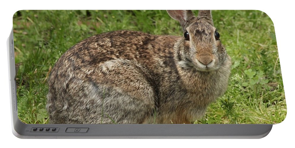 Wildlife Portable Battery Charger featuring the photograph Rabbit by Lori Tordsen