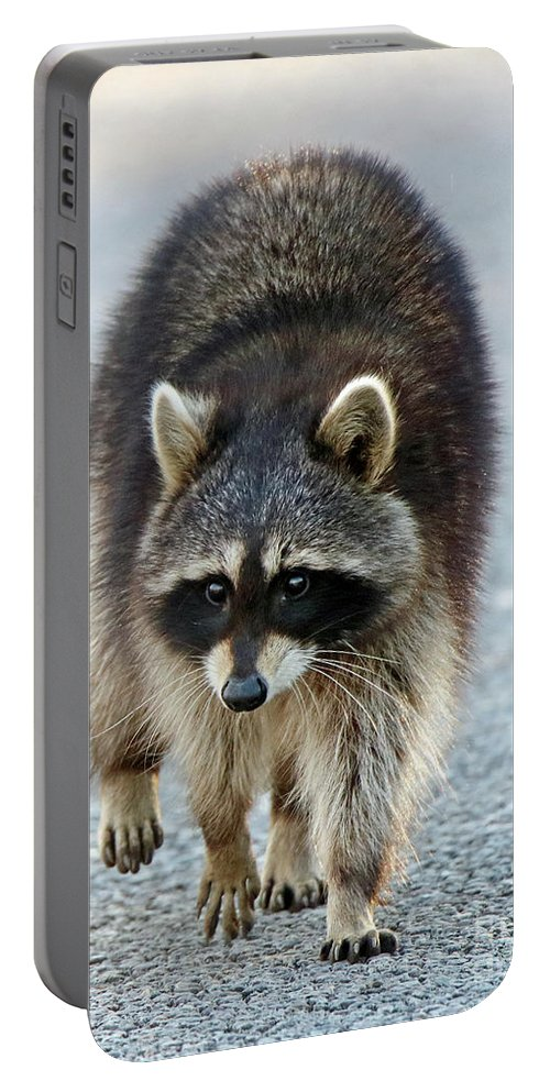 Raccoon Portable Battery Charger featuring the photograph Raccoon On The Prowl by Steve Gass