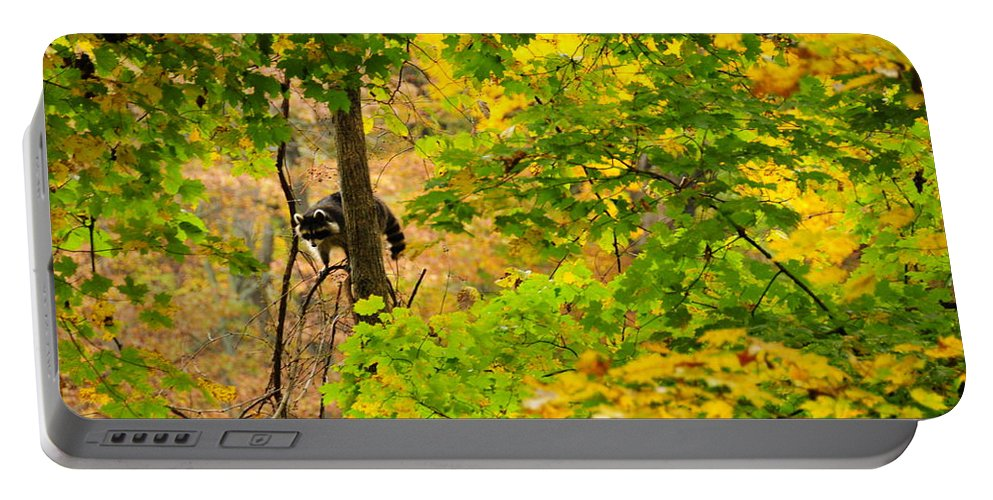 Racoon Portable Battery Charger featuring the photograph Racoon In Fall Trees by David Arment