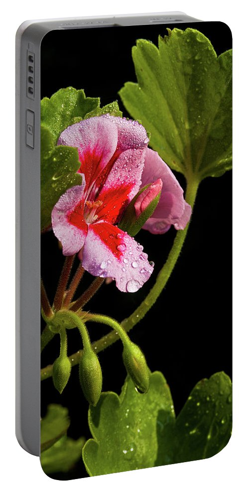 Rain Portable Battery Charger featuring the photograph Rain Refreshed by Christopher Holmes