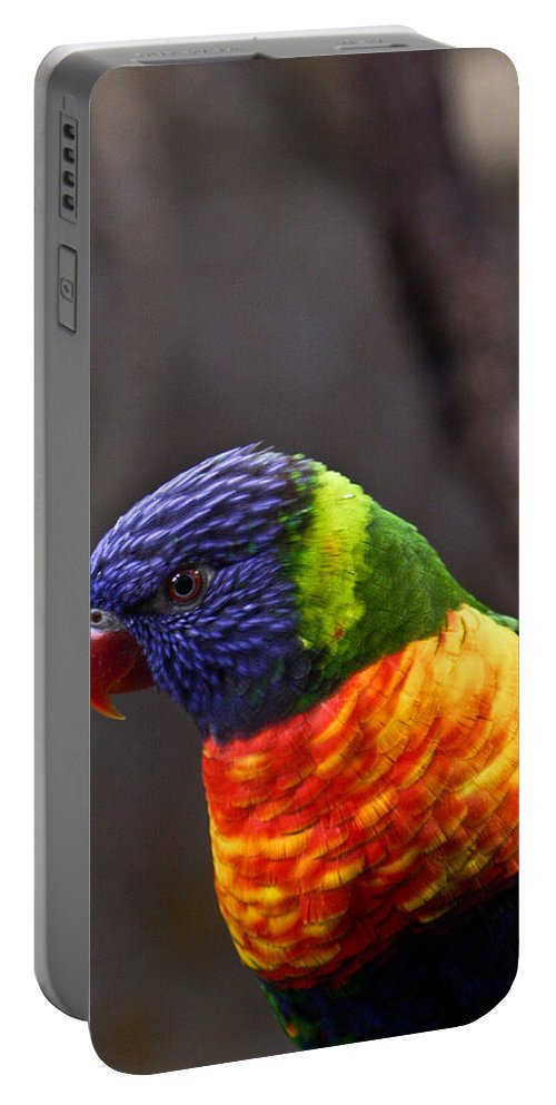 Bird Colorful Portable Battery Charger featuring the photograph Rainbow Lorikeet by Douglas Barnett