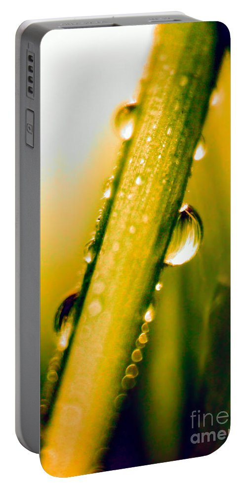 Raindrops On A Blade Of Grass Portable Battery Charger featuring the photograph Raindrops On A Blade Of Grass by Mariola Bitner