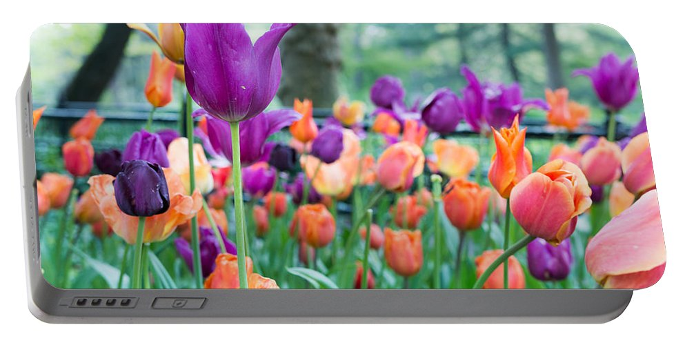 Central Park Portable Battery Charger featuring the photograph Rainy Day Flowers by Robert Popa