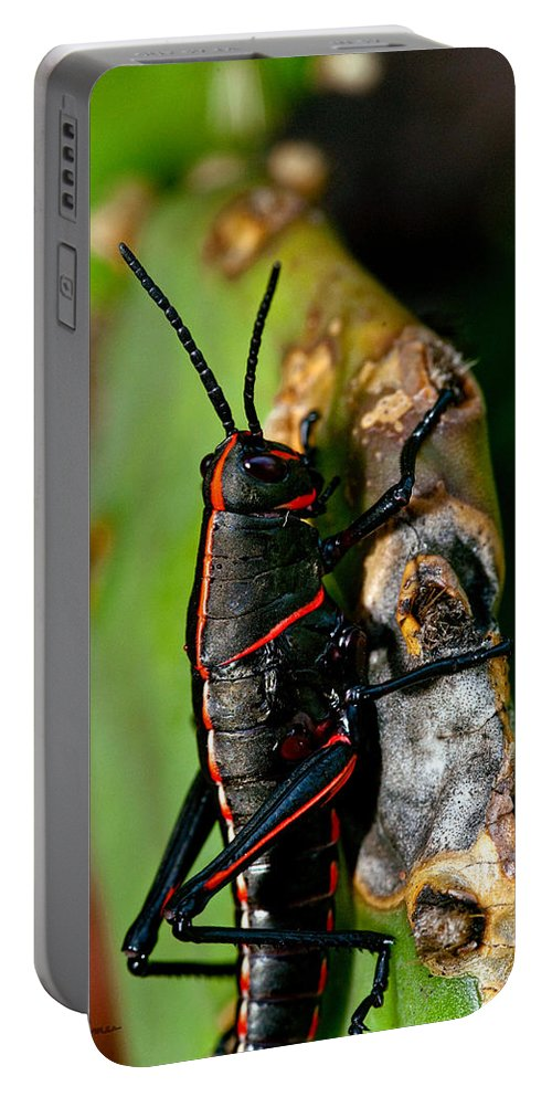 Insect Portable Battery Charger featuring the photograph Rally Striped by Christopher Holmes