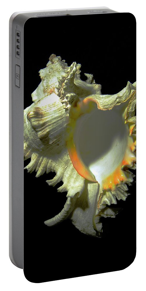 Frank Wilson Portable Battery Charger featuring the photograph Rams Horn Seashell Murex Ramosus by Frank Wilson