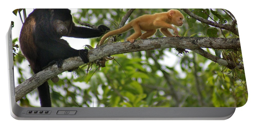 Monkey Portable Battery Charger featuring the photograph Rare Golden Monkey by Heather Coen