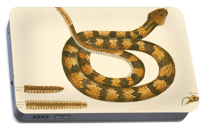 Viper Caudison Snake Portable Battery Charger featuring the drawing Rattlesnake by Mark Catesby