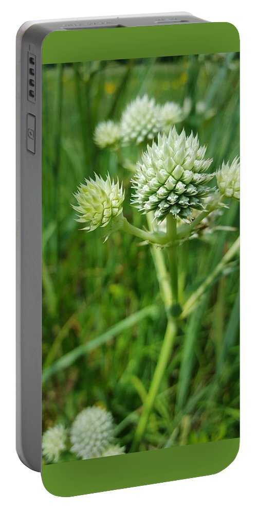 Spiky Portable Battery Charger featuring the digital art Rattlesnake Master by Keith Feltz