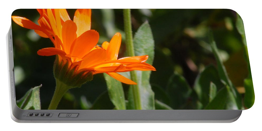 Orange Daisy Portable Battery Charger featuring the photograph Reach For The Sun 2 by Amy Fose