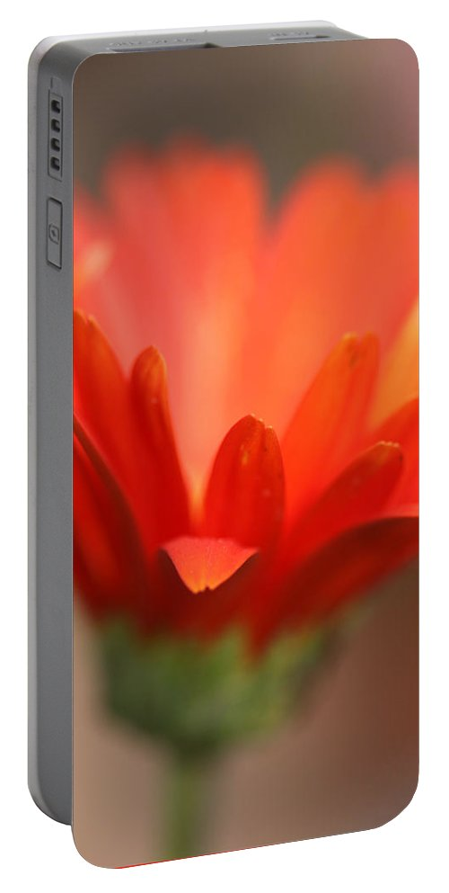 Daisy Plant Flower Orange Green Growing Photography Photograph Art Digital Portable Battery Charger featuring the photograph Reaching Out by Shari Jardina