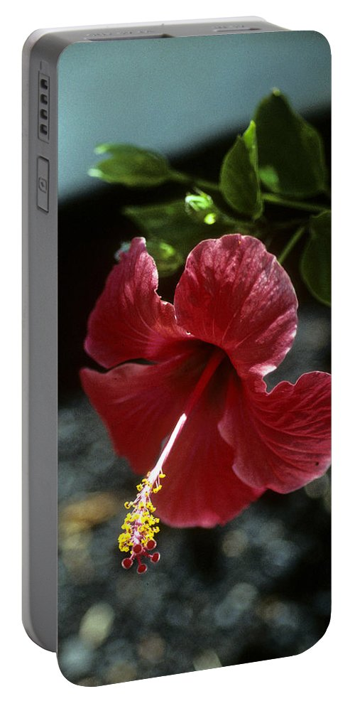 Orchid Portable Battery Charger featuring the photograph Ready For Picking by Gary Wonning