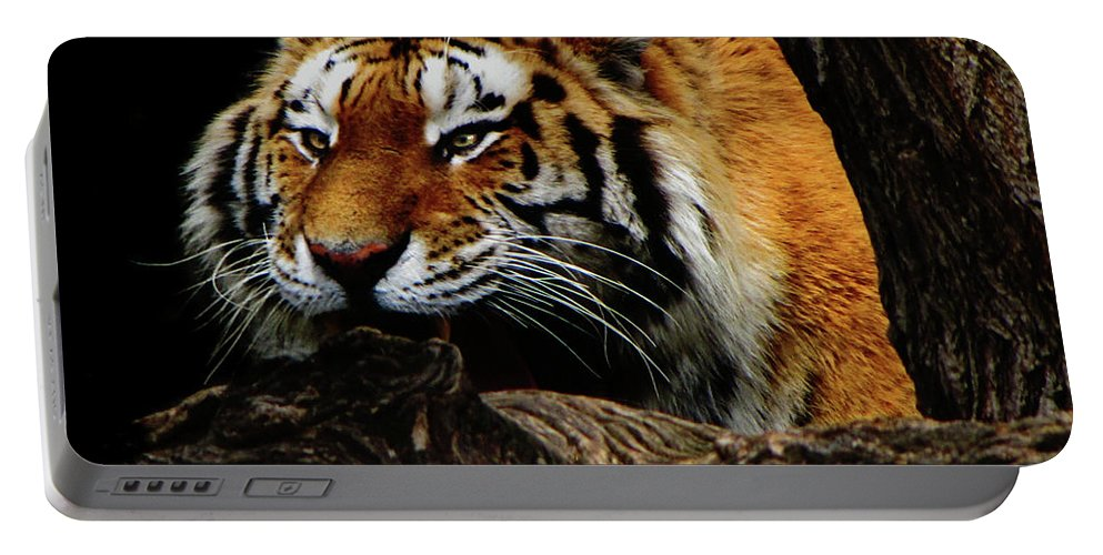 Tiger Portable Battery Charger featuring the photograph Ready Or Not by September Stone