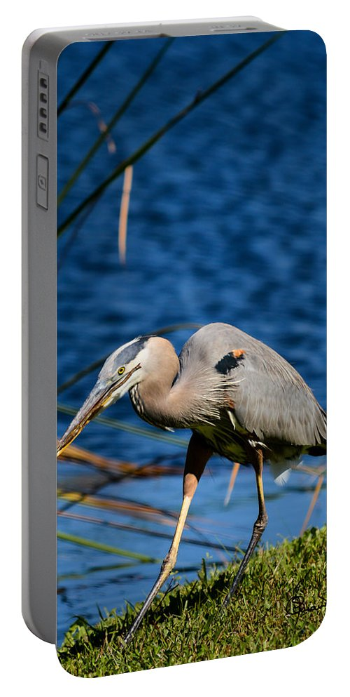 susan Molnar Portable Battery Charger featuring the photograph Ready To Build by Susan Molnar