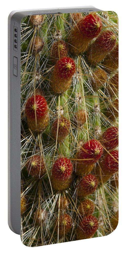 Cactus Portable Battery Charger featuring the photograph Ready To Pop by Kelley King