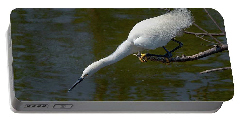 Snowy Egret Portable Battery Charger featuring the photograph Ready..set.. by Christopher Holmes