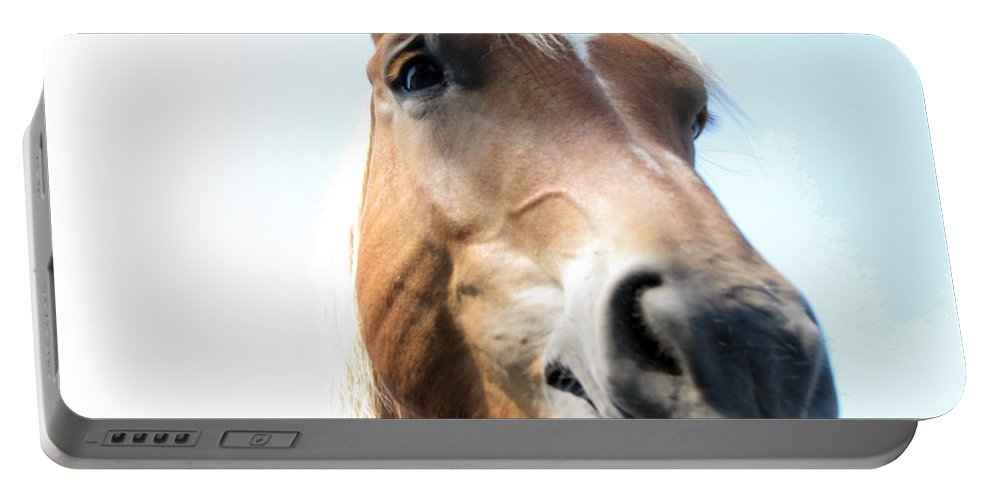 Horse Portable Battery Charger featuring the photograph Really by Amanda Barcon