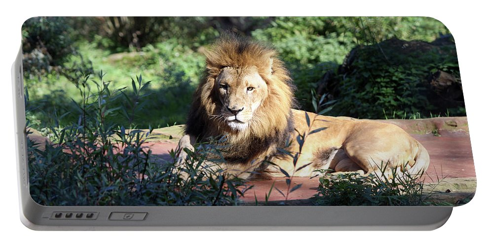 Lion Portable Battery Charger featuring the photograph Reclining King by Christiane Schulze Art And Photography