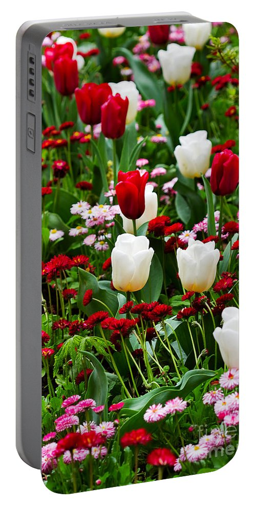 Flower Portable Battery Charger featuring the photograph Red And White Tulips With Red And Pink English Daisies In Spring by Louise Heusinkveld