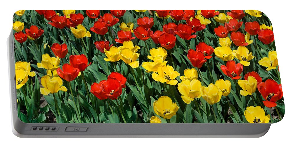 Red Portable Battery Charger featuring the photograph Red And Yellow Tulips Naperville Illinois by Michael Bessler