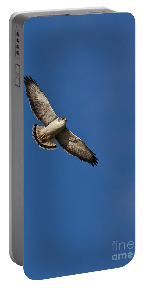 Red-backed Hawk Portable Battery Charger featuring the photograph Red-backed Hawk by Jean-Louis Klein & Marie-Luce Hubert