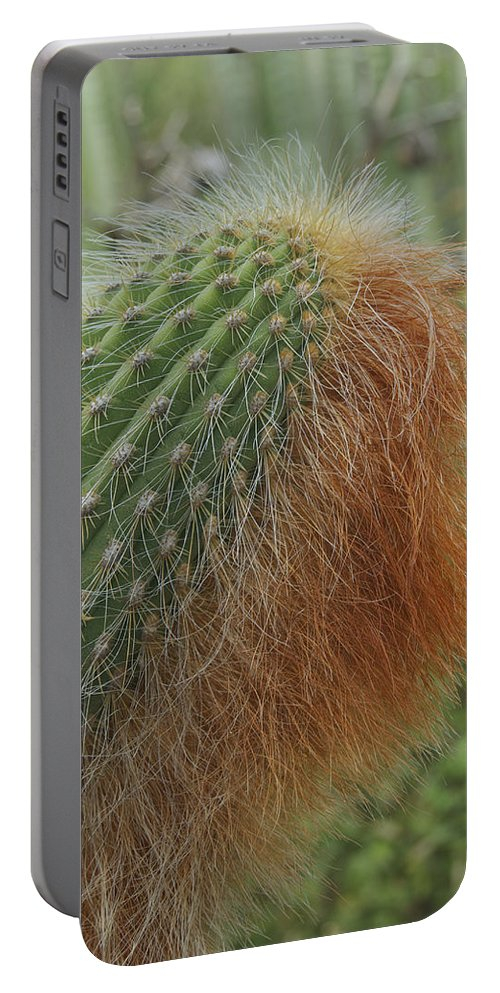 Landscape Portable Battery Charger featuring the photograph Red Beard by Michael Peychich