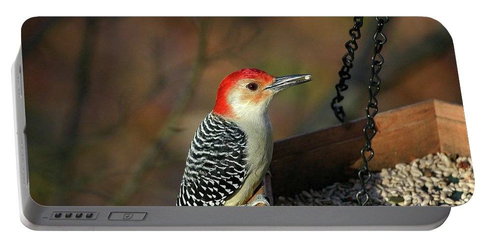 Woodpecker Portable Battery Charger featuring the photograph Red-bellied Woodpecker by Karol Livote