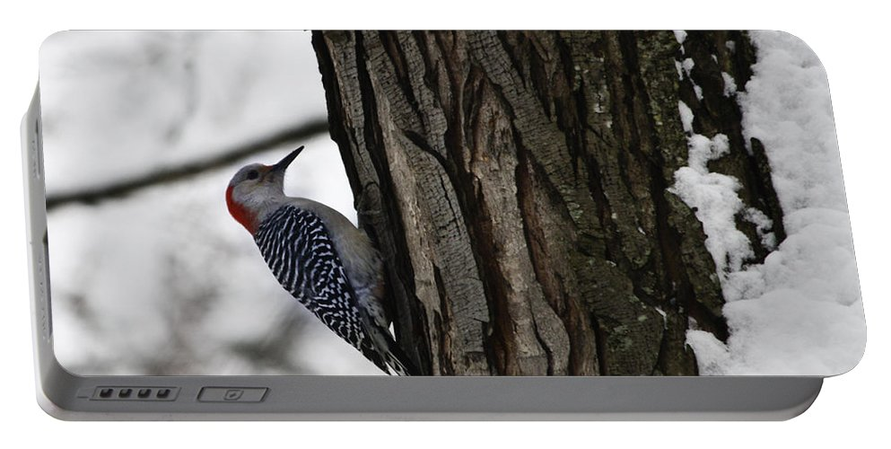 Woodpecker Portable Battery Charger featuring the photograph Red Bellied Woodpecker No 1 by Teresa Mucha