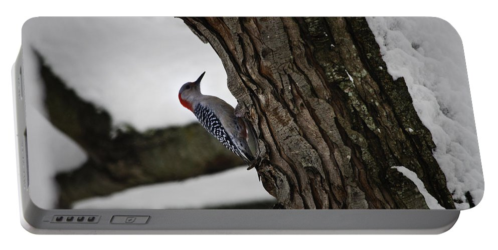 Woodpecker Portable Battery Charger featuring the photograph Red Bellied Woodpecker No 2 by Teresa Mucha