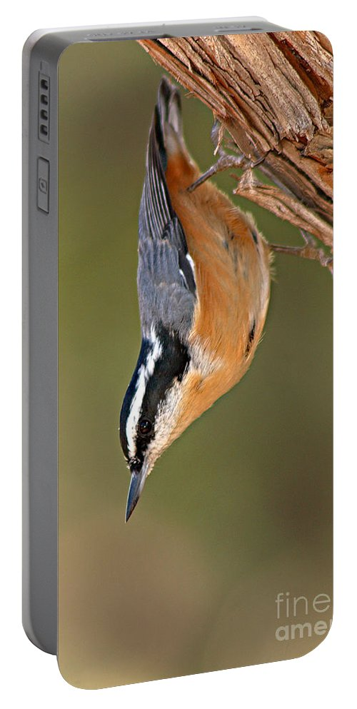 Nuthatch Portable Battery Charger featuring the photograph Red-breasted Nuthatch Upside Down by Max Allen