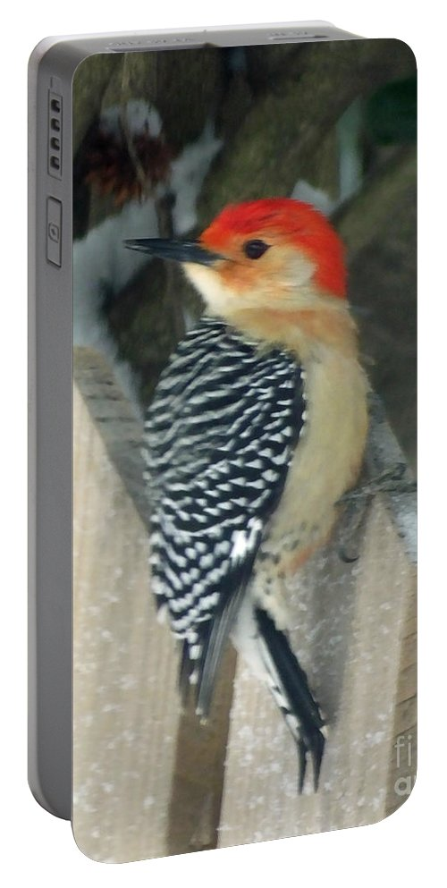 Nature Portable Battery Charger featuring the photograph Red Breasted Woodpecker On Fence by Lizi Beard-Ward